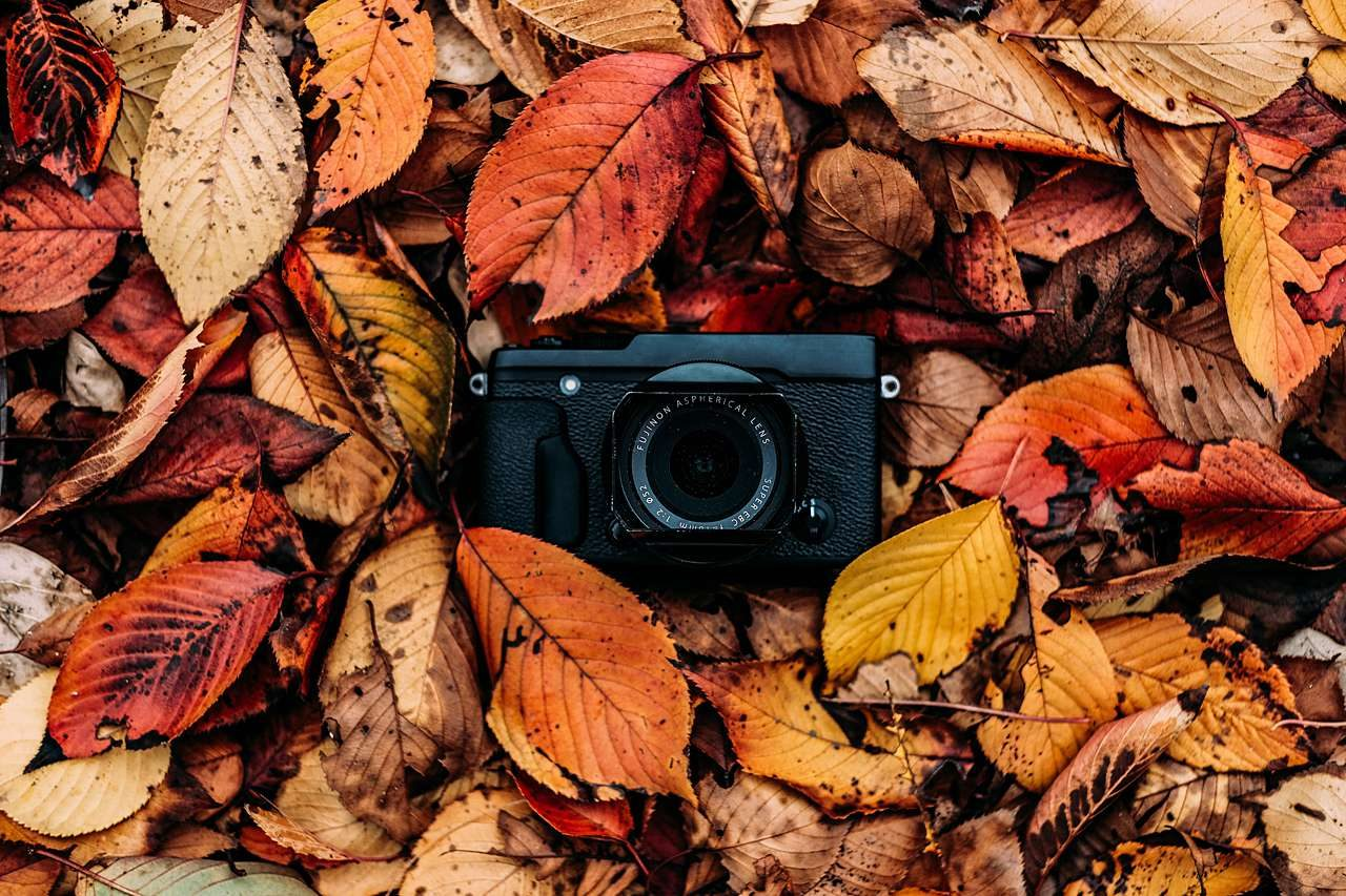 camera in fall leaves