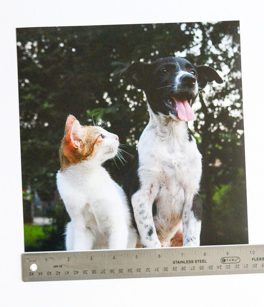 Metal ruler measuring photo of dog and cat
