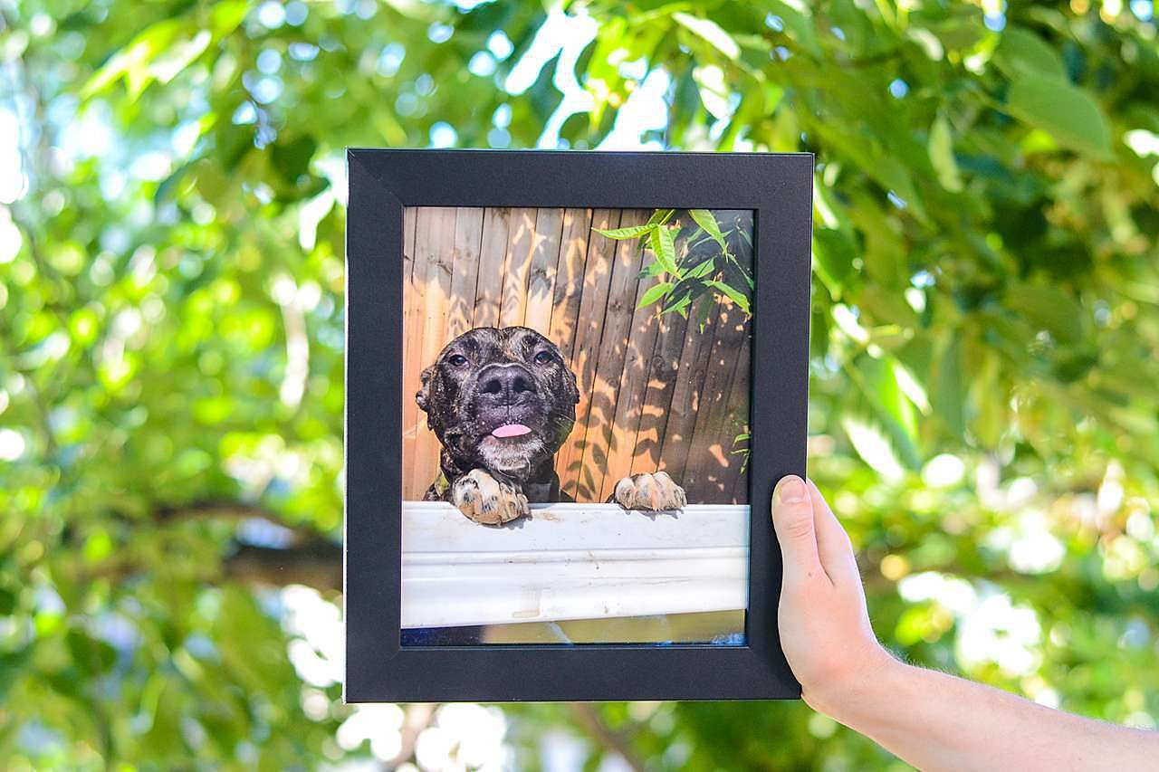 Pet Photo Black Picture Frame