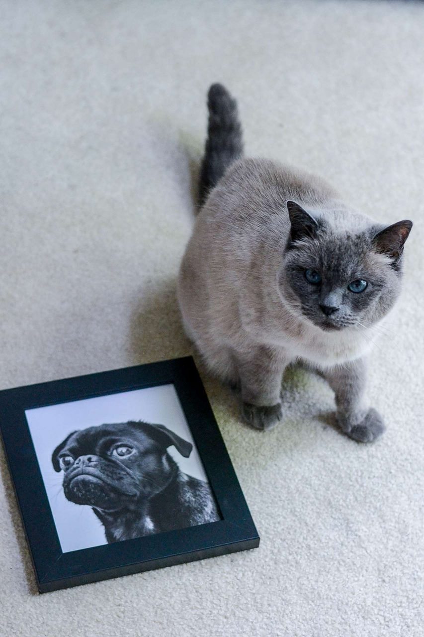 Concerned cat with framed picture of dog