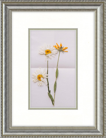 pressed flower in silver ornate frame