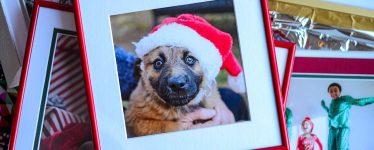 dog with santa hat red frame