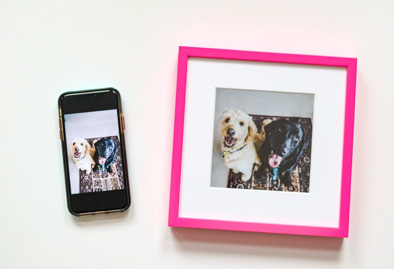framed pet photos