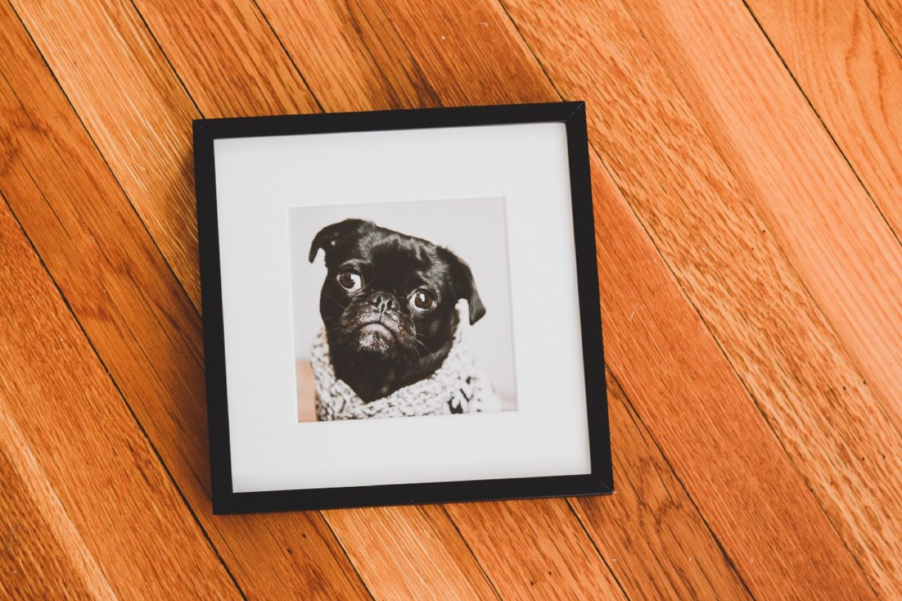 small frame of dog