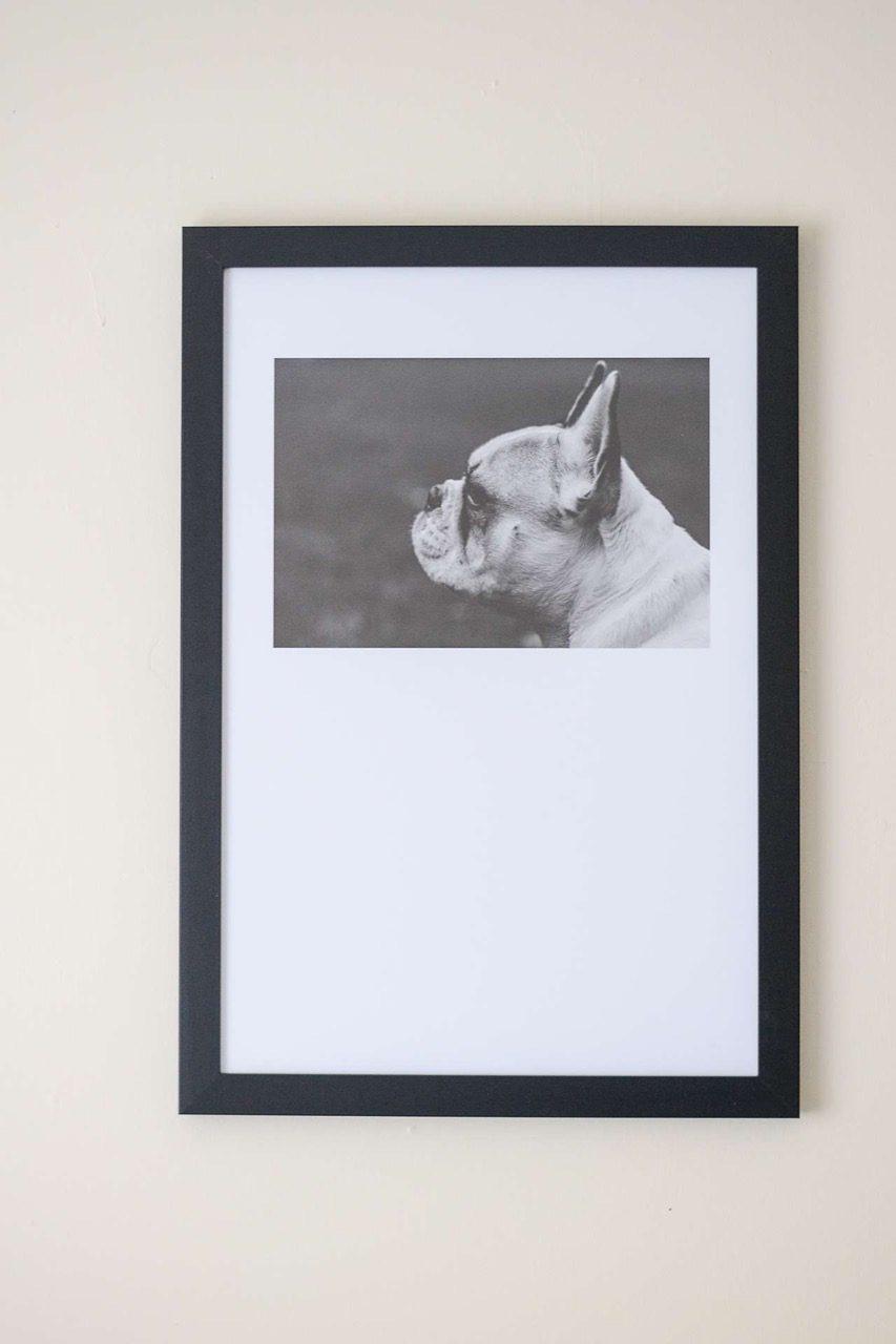 side profile of dog