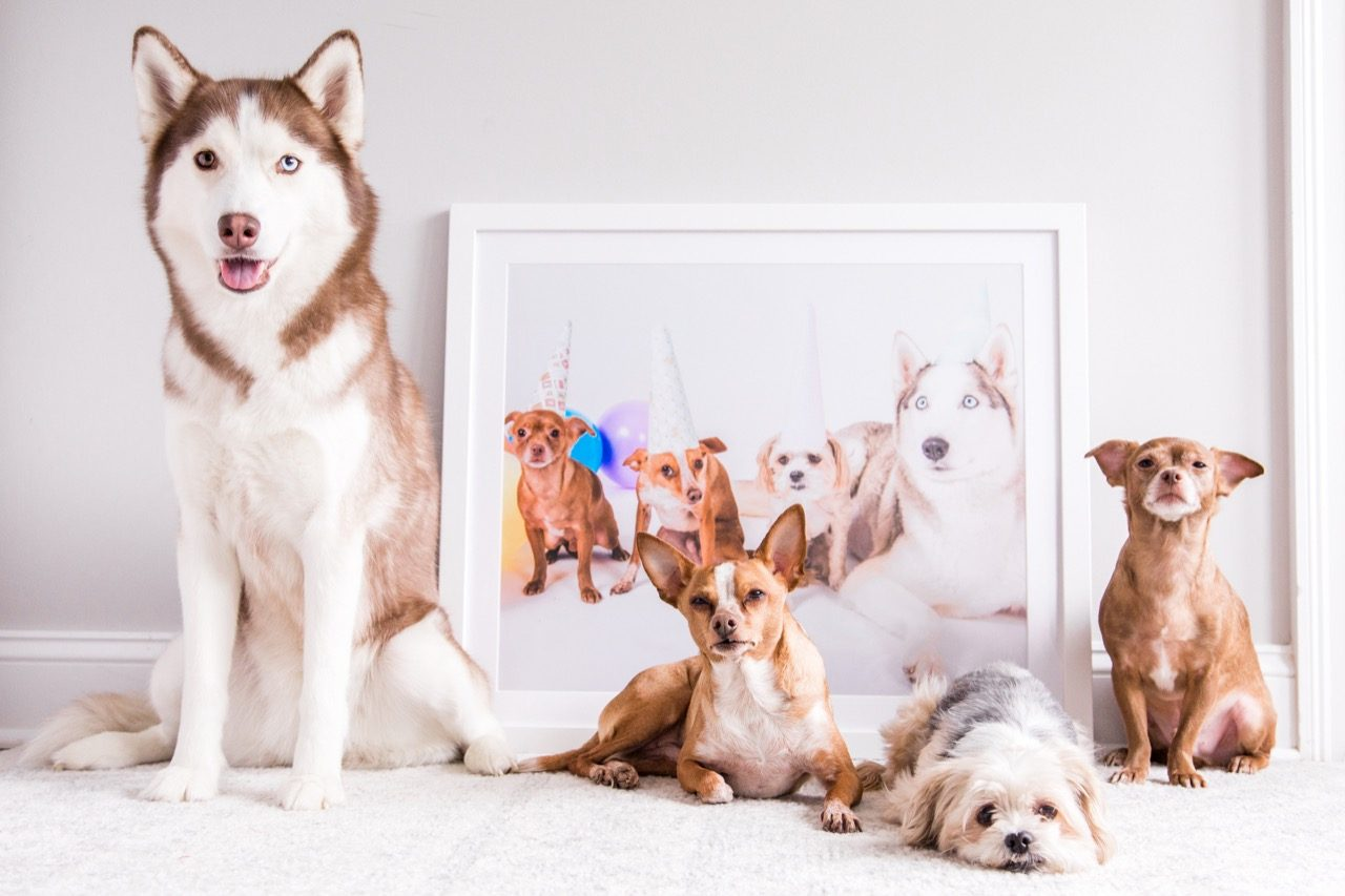 Framed picture of pets