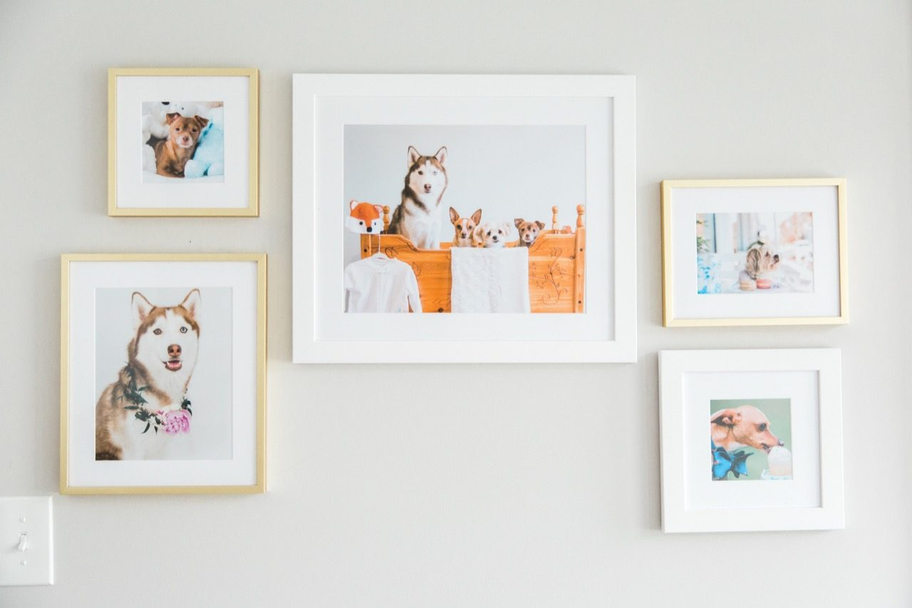 gallery wall of dogs