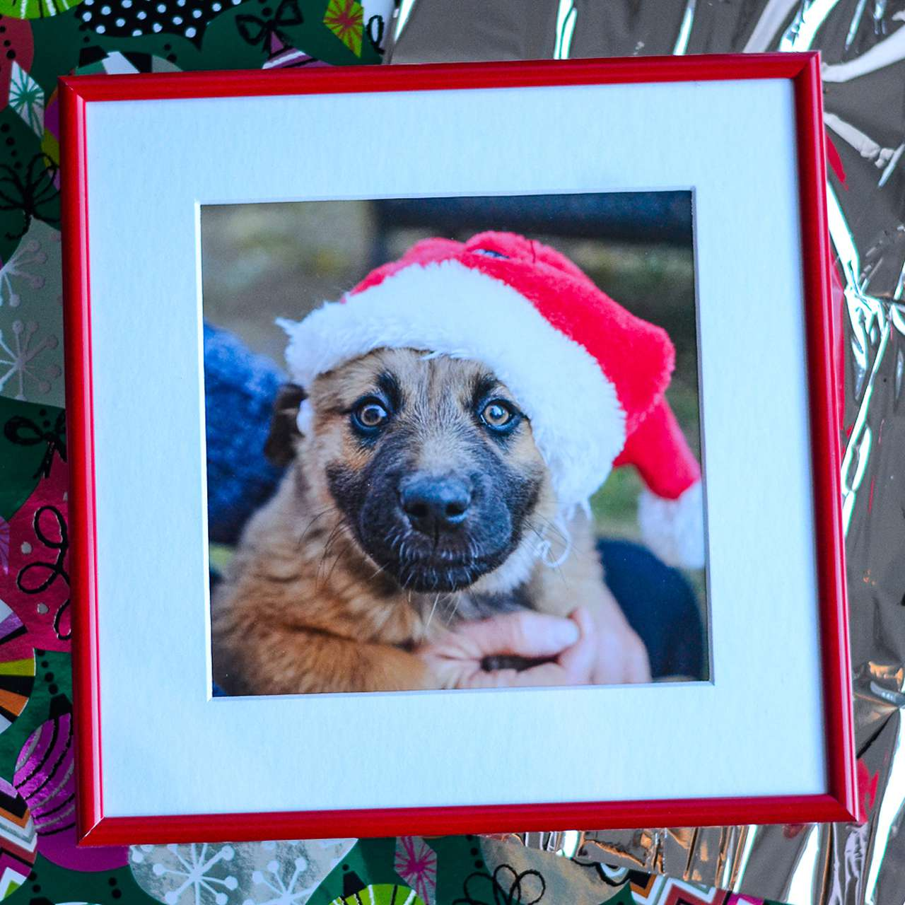 framed picture of dog in Santa hat