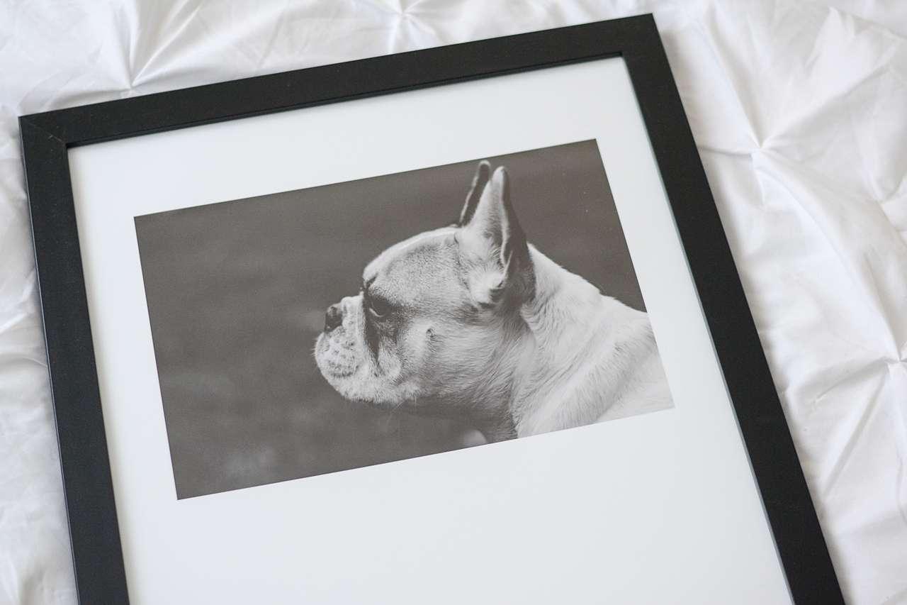 framed photo of pet