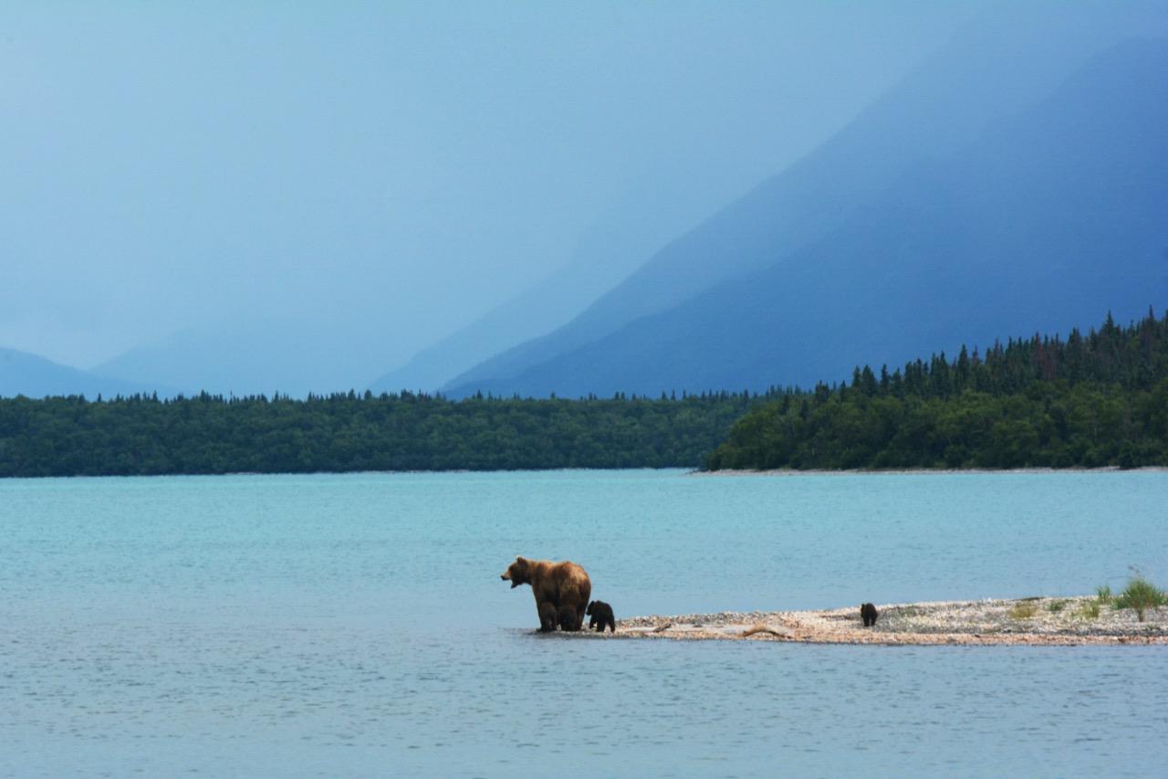 wildlife in Alaska
