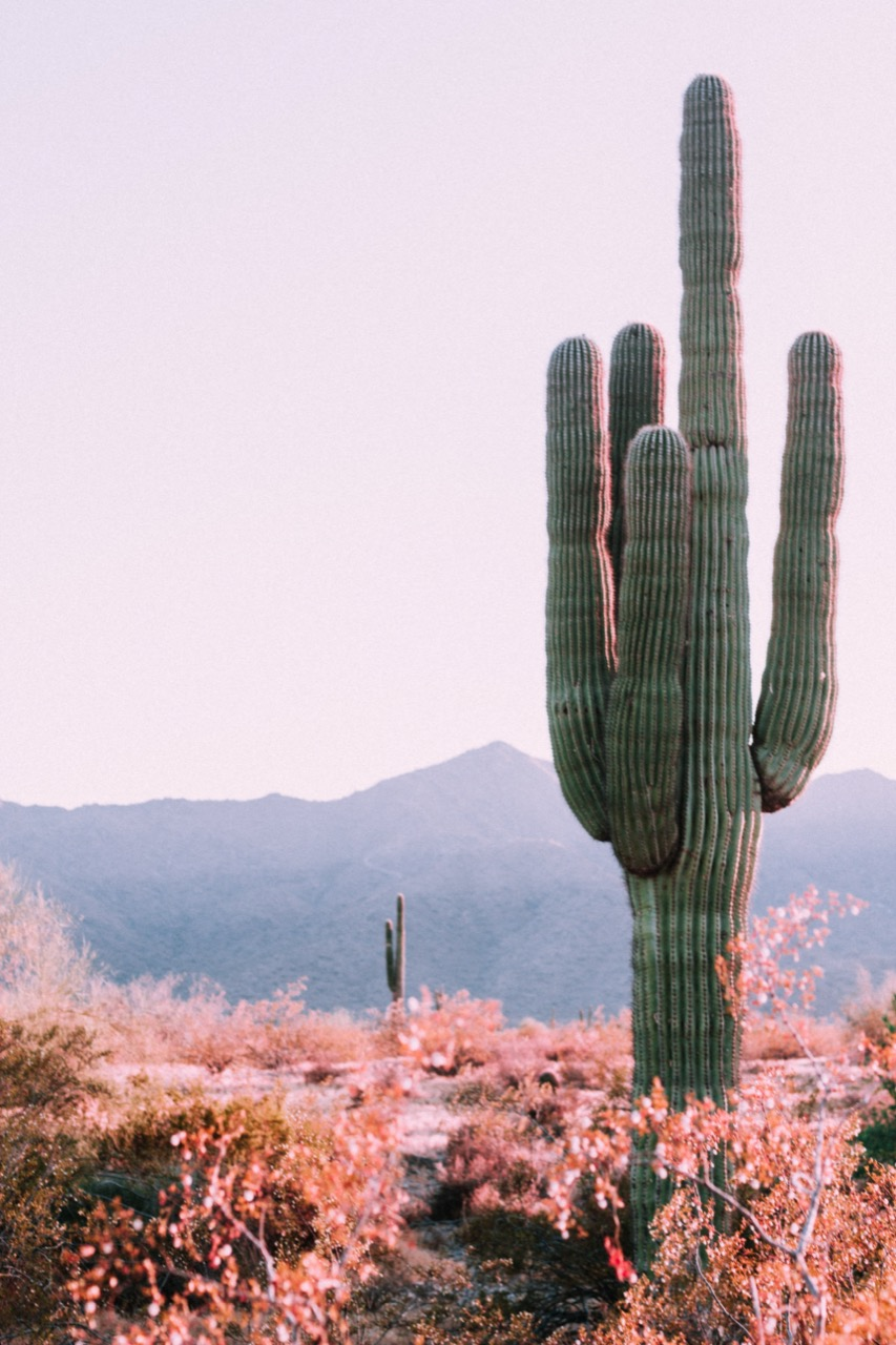 Cactus in Arizona