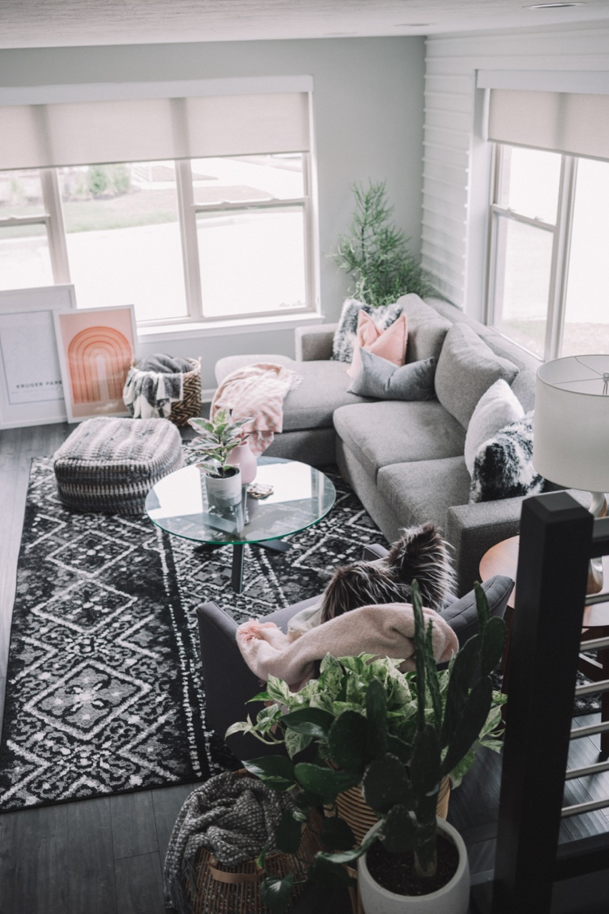 Interior plants for living room decor