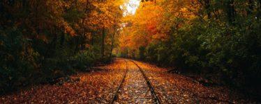 Leaves falling on train tracks